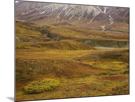 Fall colors on the tundra in Denali National Park-John Eastcott & Yva Momatiuk-Mounted Photographic Print