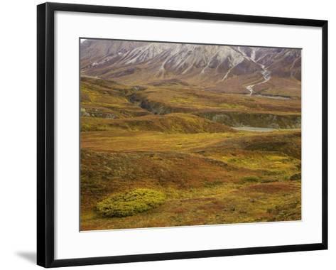 Fall colors on the tundra in Denali National Park-John Eastcott & Yva Momatiuk-Framed Art Print