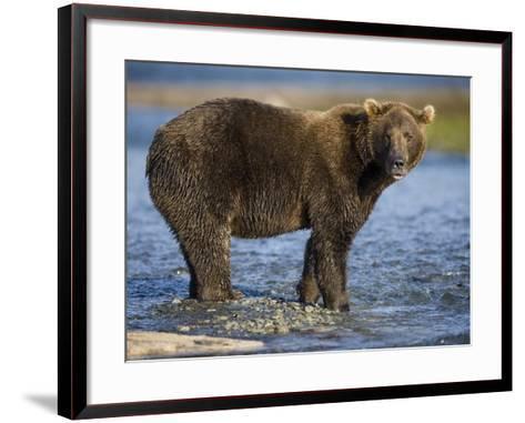 Brown Bear in Stream at Kukak Bay in Katmai National Park-Paul Souders-Framed Art Print