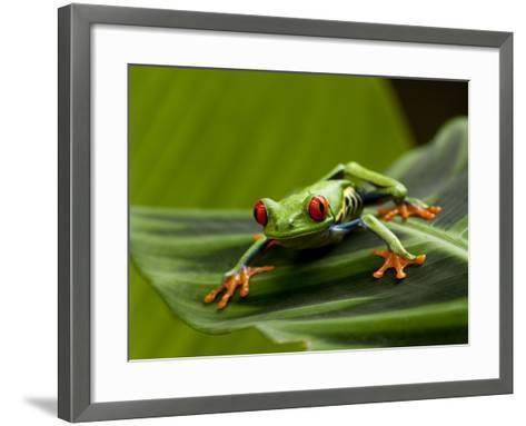 Tree Frog in Costa Rica-Paul Souders-Framed Art Print
