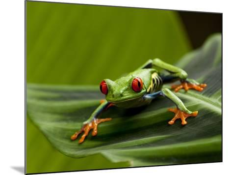 Tree Frog in Costa Rica-Paul Souders-Mounted Photographic Print