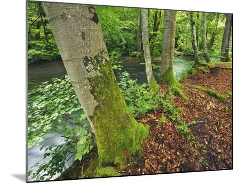 River and Beech trees-Frank Krahmer-Mounted Photographic Print