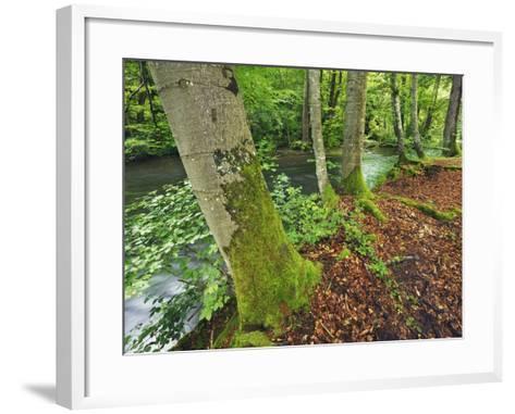 River and Beech trees-Frank Krahmer-Framed Art Print