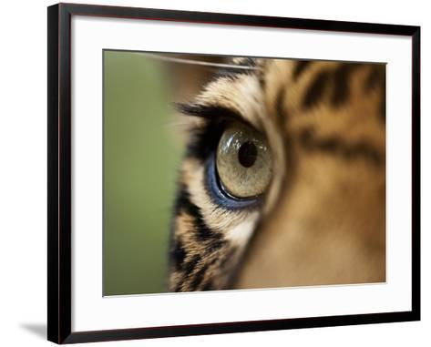 Captive Jaguar at Las Pumas Rescue Shelter-Paul Souders-Framed Art Print