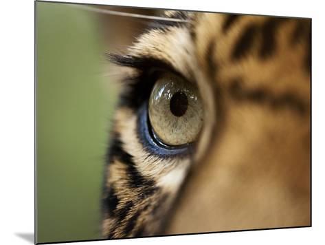 Captive Jaguar at Las Pumas Rescue Shelter-Paul Souders-Mounted Photographic Print