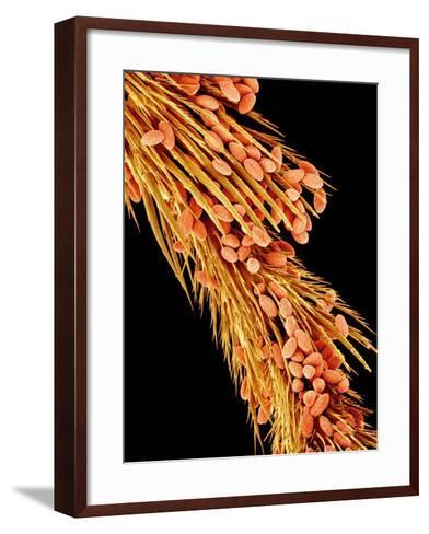 Leg of a bee with pollen-Micro Discovery-Framed Art Print
