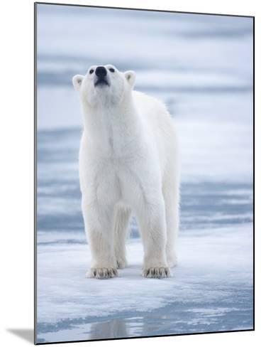 Polar Bear, Svalbard, Norway-Paul Souders-Mounted Photographic Print