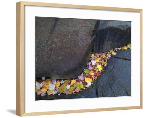 Red Maple Leaves at Onaping Falls Near Onaping, Ontario, Canada-Mike Grandmaison-Framed Art Print