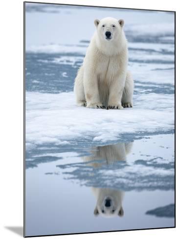 Polar Bear on ice-Paul Souders-Mounted Photographic Print