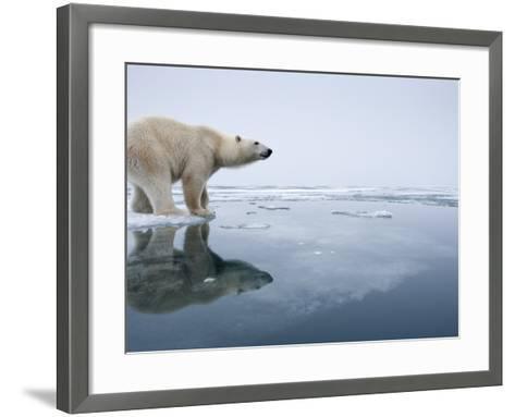 Polar Bear on Melting Ice, Svalbard, Norway-Paul Souders-Framed Art Print