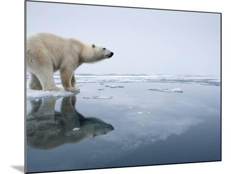 Polar Bear on Melting Ice, Svalbard, Norway-Paul Souders-Mounted Photographic Print