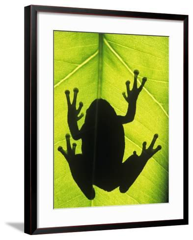 Silhouette of an Eastern Tree Frog (hyla Versicolor) Clinging to a Leaf, Walden, Ontario, Canada-Don Johnston-Framed Art Print