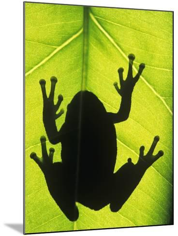 Silhouette of an Eastern Tree Frog (hyla Versicolor) Clinging to a Leaf, Walden, Ontario, Canada-Don Johnston-Mounted Photographic Print