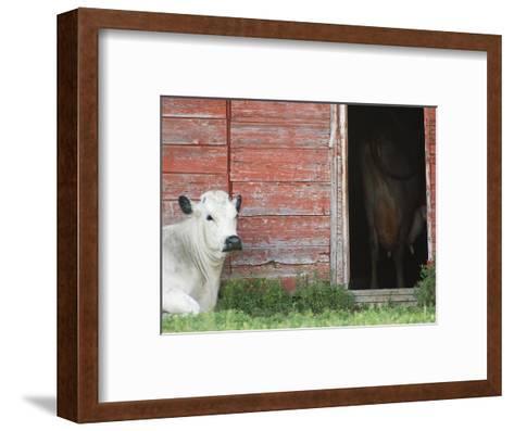 Cows and Red Barn, Southern Saskatchewan, Canada-Sam Chrysanthou-Framed Art Print