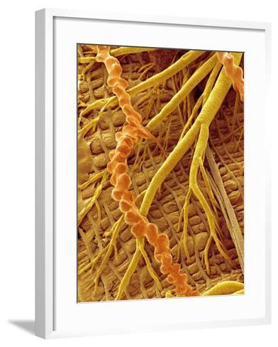 Interior of Moth larva-Micro Discovery-Framed Art Print