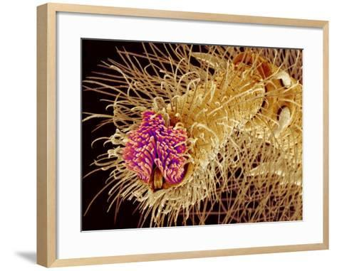 Hairs on the tip of the leg of a spider-Micro Discovery-Framed Art Print