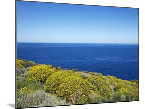 Tree spurge on Stromboli Island-Frank Krahmer-Mounted Photographic Print
