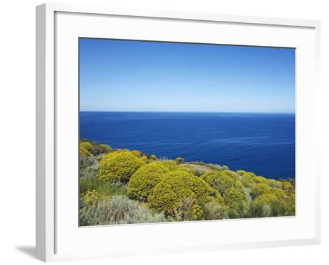 Tree spurge on Stromboli Island-Frank Krahmer-Framed Art Print