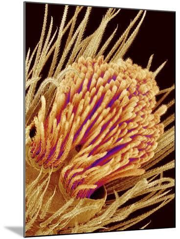Hairs on the tip of the leg of a spider-Micro Discovery-Mounted Photographic Print