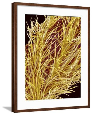 Stamen of Oleander-Micro Discovery-Framed Art Print