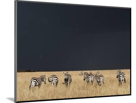 Burchell's Zebras on Savanna Below Stormy Sky-Paul Souders-Mounted Photographic Print