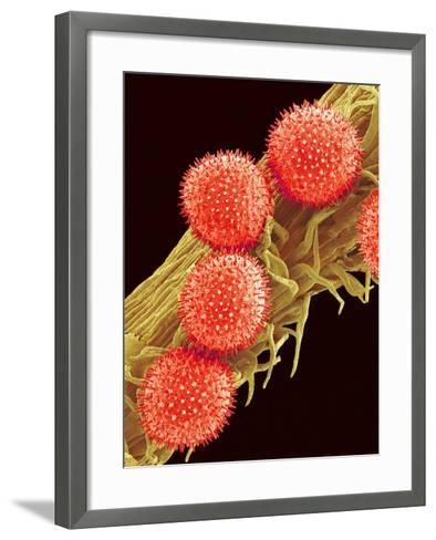 Pollen on Pistil of Mallow-Micro Discovery-Framed Art Print