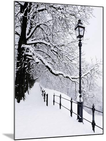 Trees and lamp post in snow-Bruno Ehrs-Mounted Photographic Print