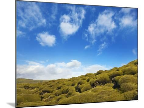 Moss landscape over lava field-Frank Krahmer-Mounted Photographic Print