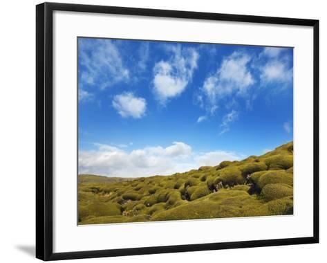 Moss landscape over lava field-Frank Krahmer-Framed Art Print