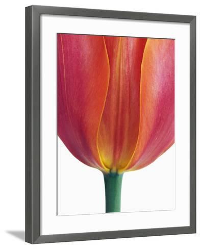 Tulip-Frank Krahmer-Framed Art Print