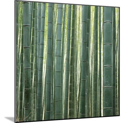 Bamoo Forest in Kyoto-Micha Pawlitzki-Mounted Photographic Print