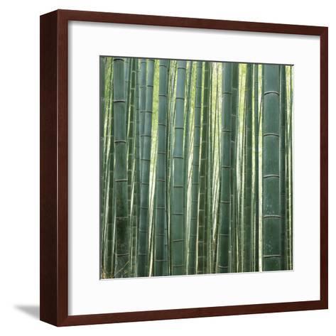 Bamoo Forest in Kyoto-Micha Pawlitzki-Framed Art Print