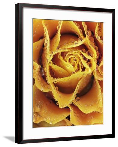 Rose with rain drops-Frank Krahmer-Framed Art Print