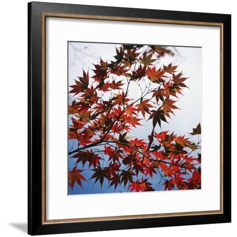 Colorful leaves-Micha Pawlitzki-Framed Art Print