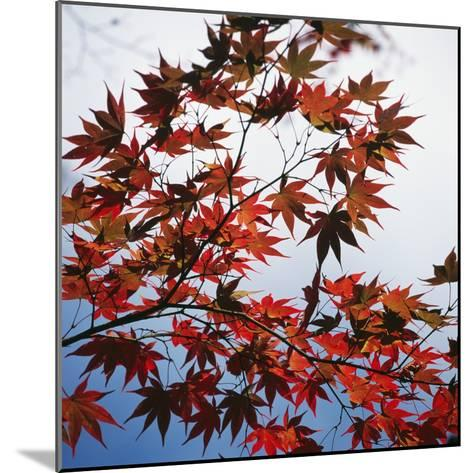 Colorful leaves-Micha Pawlitzki-Mounted Photographic Print