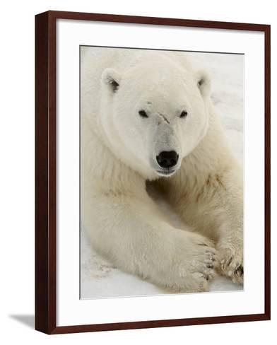 Polar bear (Ursus maritimus)-Don Johnston-Framed Art Print