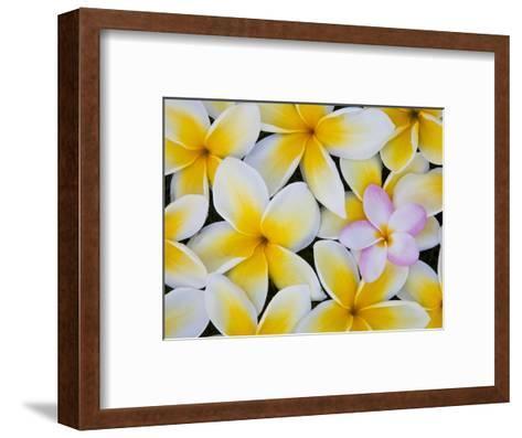 Frangipani Flowers-Darrell Gulin-Framed Art Print