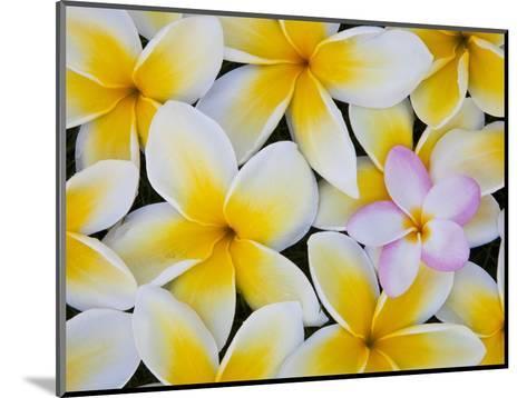 Frangipani Flowers-Darrell Gulin-Mounted Photographic Print
