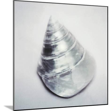 Pearl Trochus Shell-John Kuss-Mounted Photographic Print