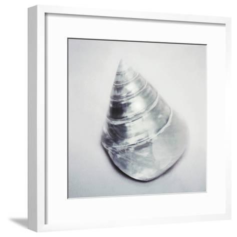 Pearl Trochus Shell-John Kuss-Framed Art Print