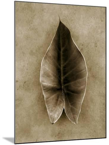 Elephant Ear-John Kuss-Mounted Photographic Print