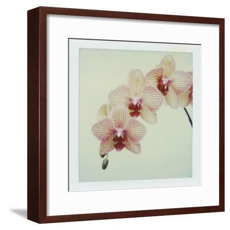 Balkan Kaleidoscope Orchid-John Kuss-Framed Art Print