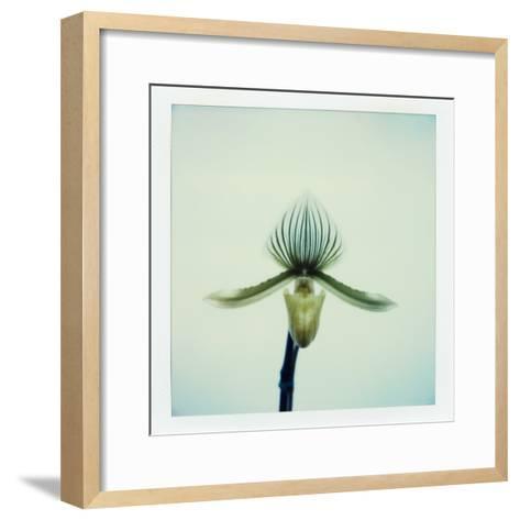Lady Slipper Orchid-John Kuss-Framed Art Print