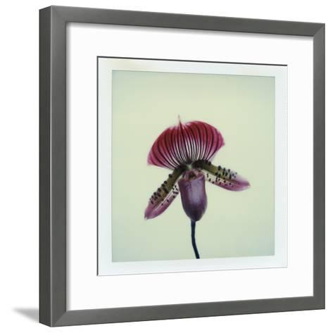 Lady Slipper Orchid-John Kuss-Framed Art Print