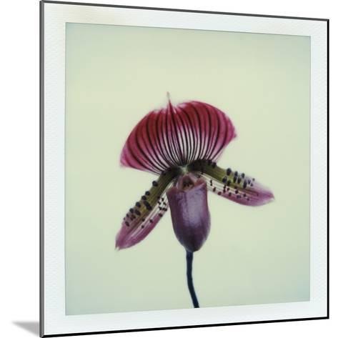Lady Slipper Orchid-John Kuss-Mounted Photographic Print