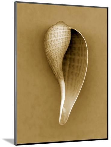 Graceful Fig Shell-John Kuss-Mounted Photographic Print