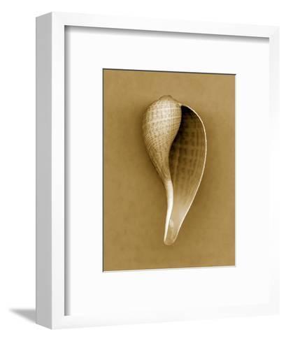 Graceful Fig Shell-John Kuss-Framed Art Print