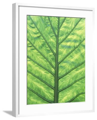 Yellow Skunk Cabbage (Lysichitum Americanum) Leaf Pattern, British Columbia, Canada.-Chris Cheadle-Framed Art Print