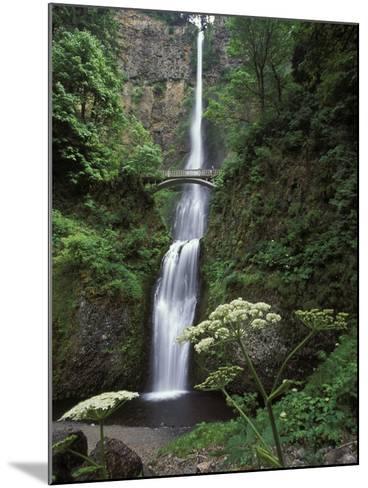 USA, Oregon, Columbia River Gorge Area, Scenic Waterfalls, Multonomah Falls-Chris Cheadle-Mounted Photographic Print