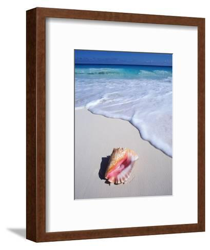 Mexico, Yucatan Peninsula, Carribean Beach at Cancun, Conch Shell on Sand-Chris Cheadle-Framed Art Print
